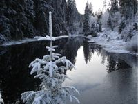 winterdream2ee1.th.jpg